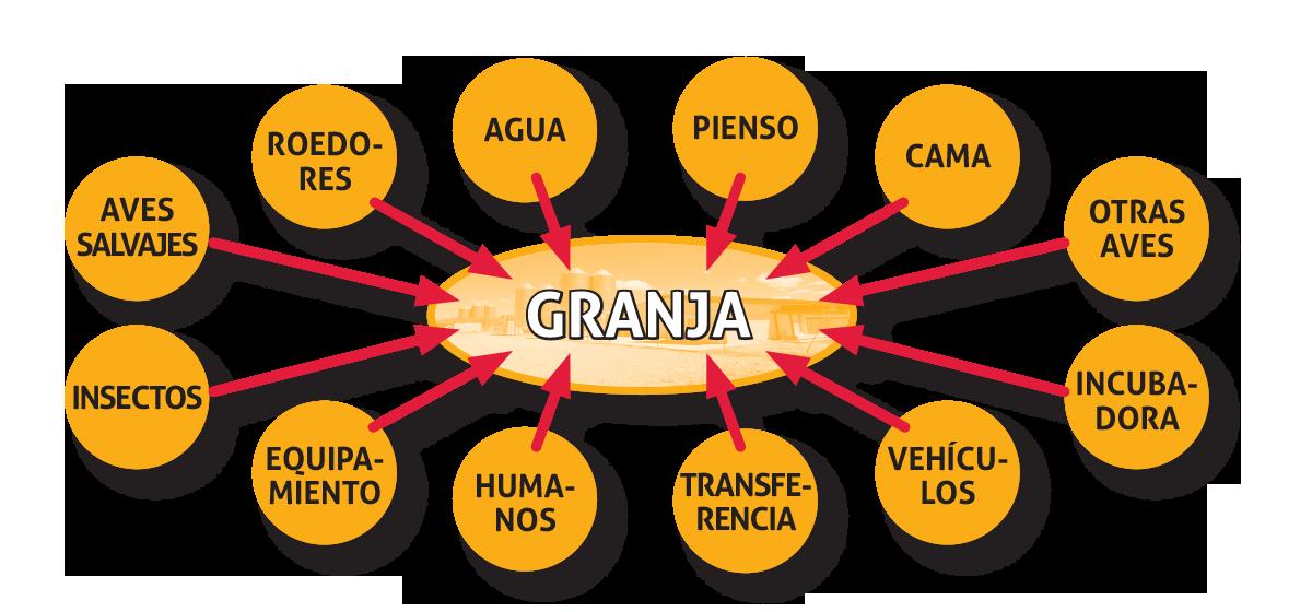 Fig1_Fuentes_potenciales_de_Salmonellas_en_una_granja_av_cola.png