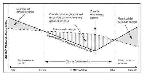 07_energia_metabolizan_fmt.jpeg