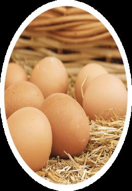 huevos_fmt.png