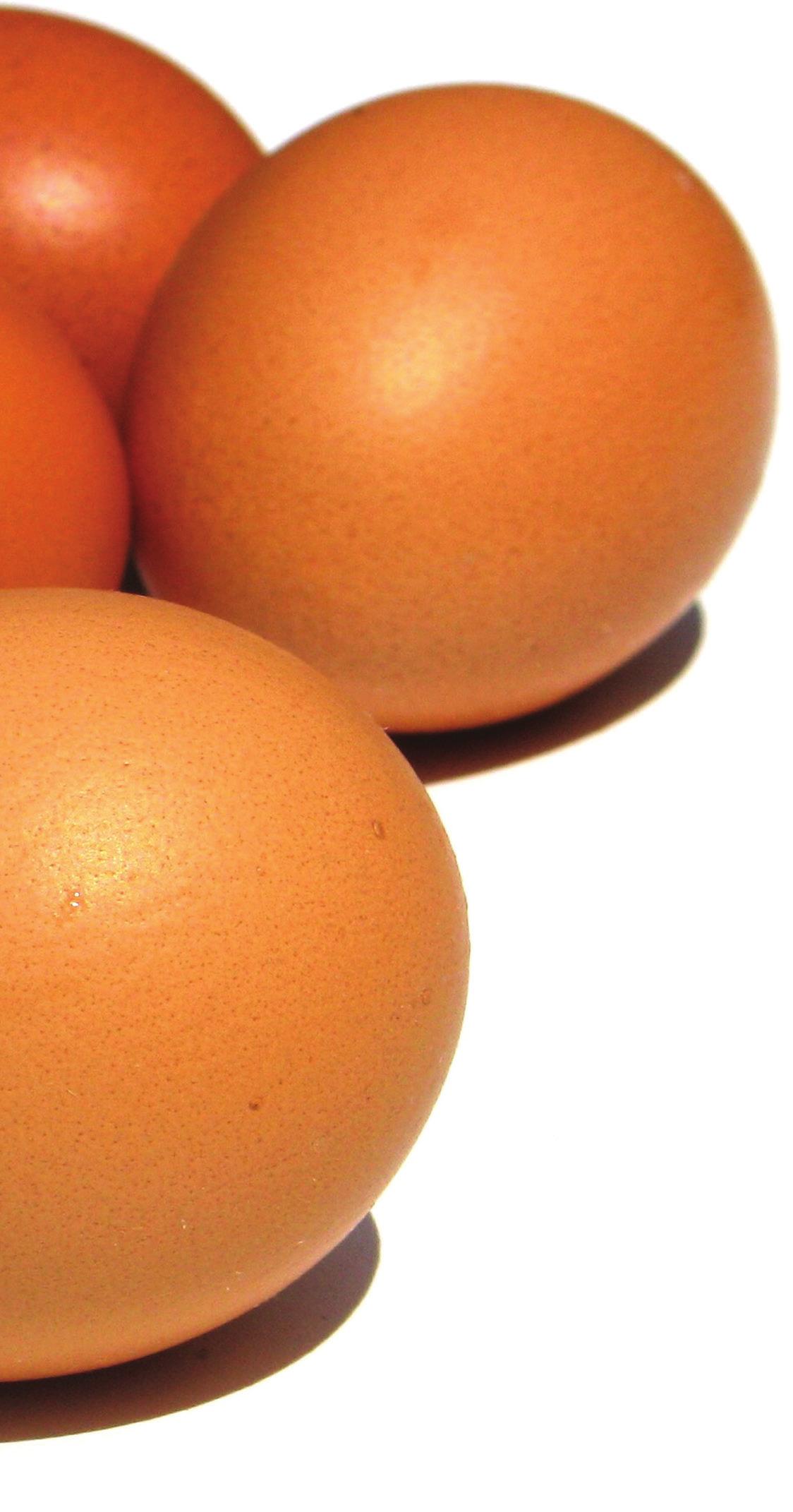 huevos gallinas camperas
