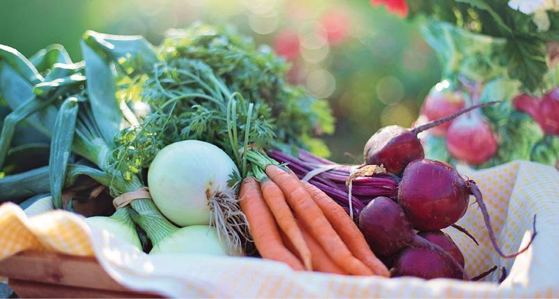 Consumo_alimentario_huevo_espa_a.jpg