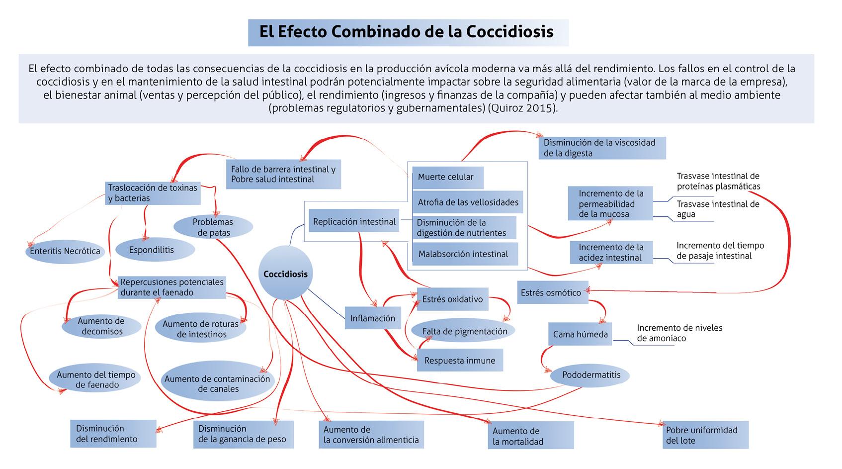 grafico_coccidiosis.jpg