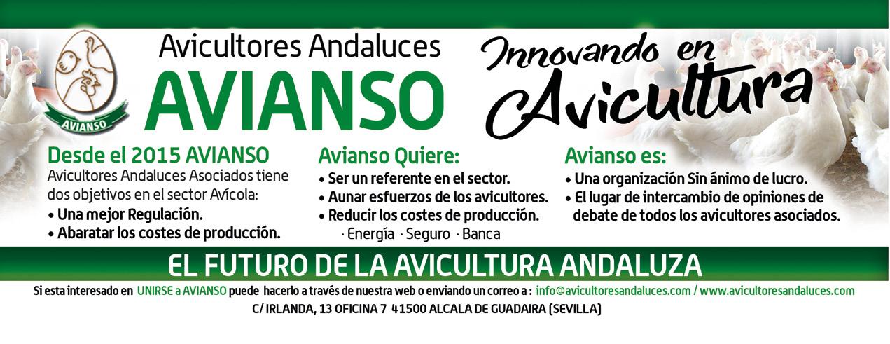 201812_35_AD_QUARTER_AVIANSO_AVIANSO.jpg