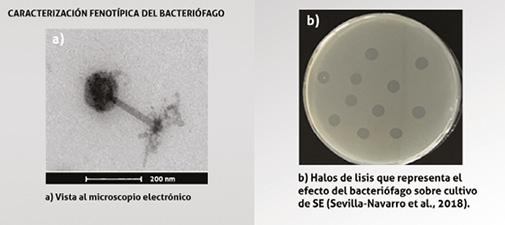 SA201901_bacteriofago.jpg