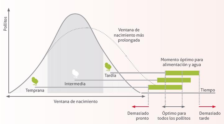 12_reglas_oro_incubacion.png