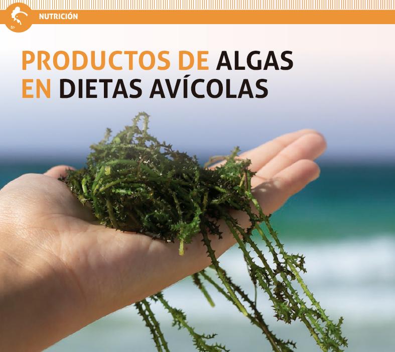 18_algas_en_dietas_avicolas.png