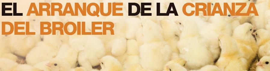 06_SA2019_06_arranque_de_la_crianza_del_pollo.png