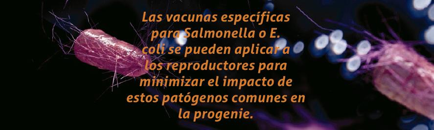 18_SA201906_salud_intestinal_en_pollos.png