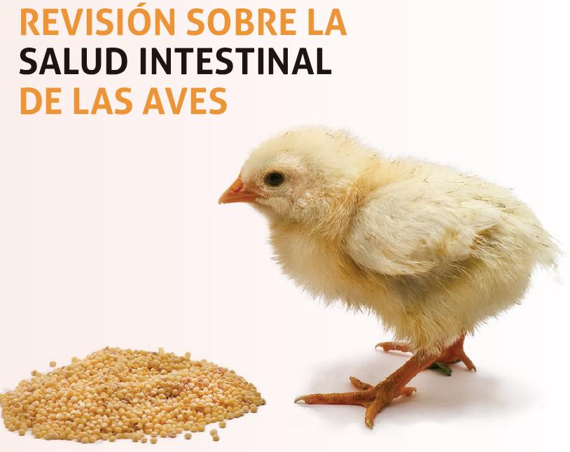 19_SA201906_salud_intestinal_en_pollos_encabezado.png