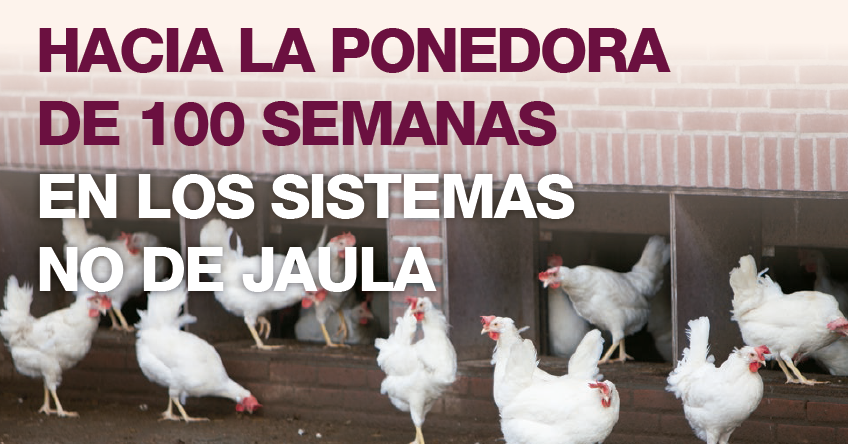 24_SA201906_hacia_la_ponedora_de_100_semanas.png